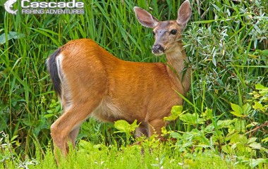 A deer in the bushes