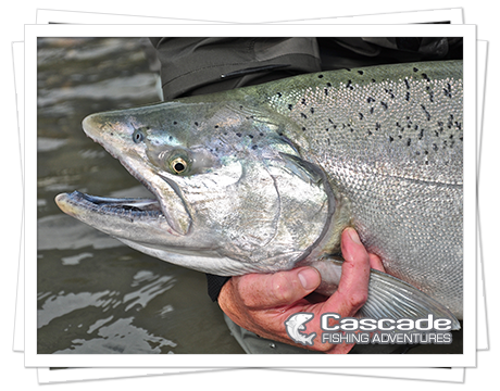 Cascade Chinook Salmon Fishing in BC