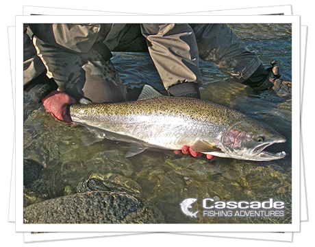Cascade Steelhead Fishing in BC
