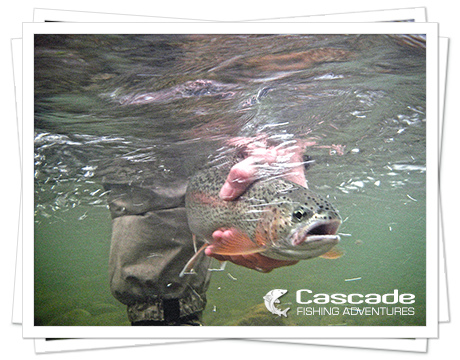 Cascade Trout Fishing in BC
