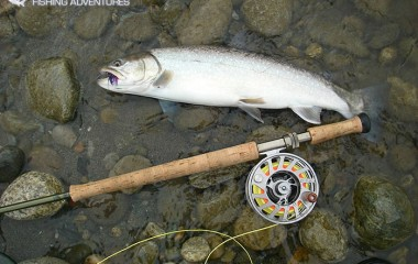 Fly Fishing For Dolly Varden Trout in BC