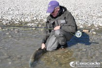 Fly fishing on the Fraser River for chum