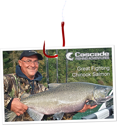 Great fighting chinook salmon