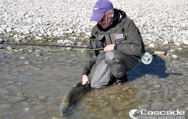 Releasing a chum salmon caught fly fishing