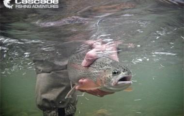 Releasing a rainbow trout filmed under water
