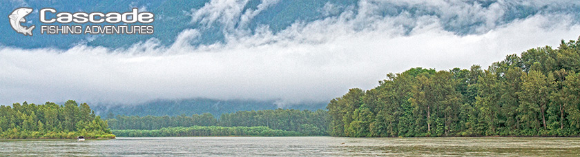 The Mighty Fraser River Chilliwack