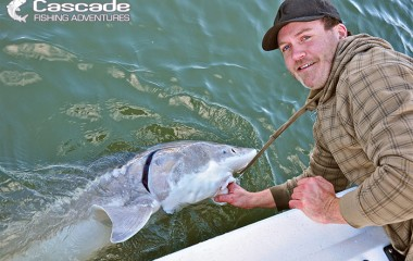 There Is Nothing Like Catching A Sturgeon
