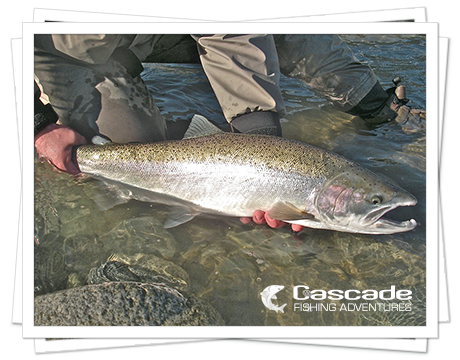 Steelhead Walk and Wade Trips