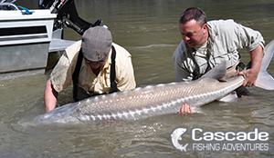 Sturgeon Release May 2015