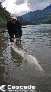7 Foot Fraser River Sturgeon