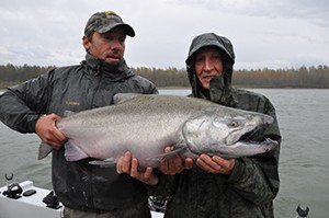 Fraser river fall run chinook