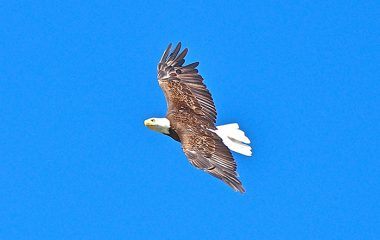 Eagle Watching us From Above